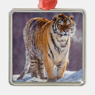 Tigre sibérien dans la neige, Chine Ornement Carré Argenté