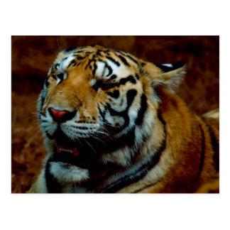 Tigre sibérien de carte postale