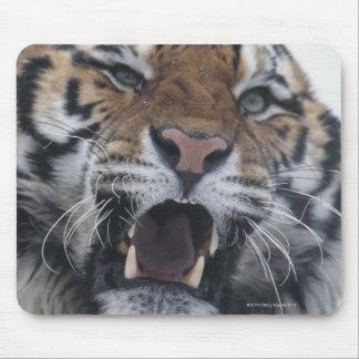 Tigre sibérien grondant tapis de souris