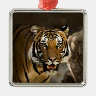 Tigre sibérien ornement carré argenté