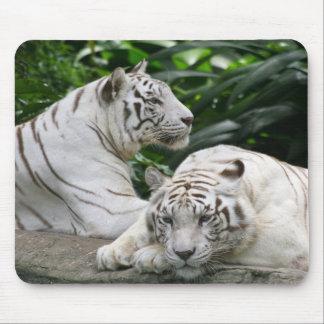 tigres blancs tapis de souris