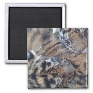 Tigres de bébé de sommeil aimant