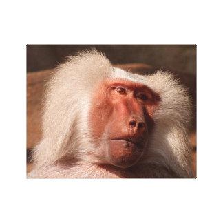 Toile Affiche mignonne de singe