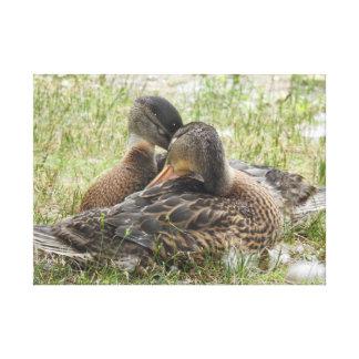 Toile Amour de canard