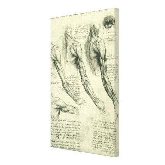 Toile Anatomie de bras et d'épaule par Leonardo da Vinci