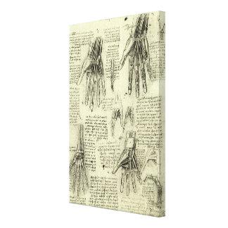 Toile Anatomie de la main humaine par Leonardo da Vinci