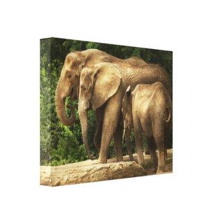Toile Animal - éléphant - famille serrée de knit