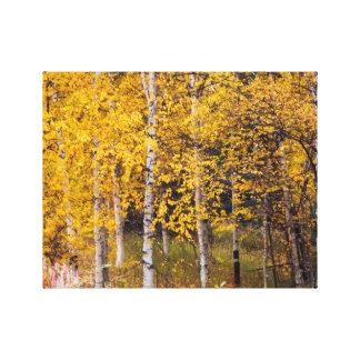 Toile Arbres de bouleau près de Denali Alaska, automne,