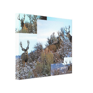 Toile Art de photo de cerfs communs de mule