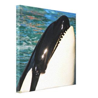 Toile Baleine indiquant le bonjour