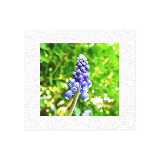 Toile bleue de fleur - jacinthe de raisin