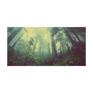 Toile brumeuse de forêt