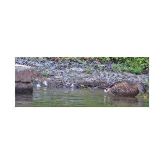 Toile Canard dans l'étang