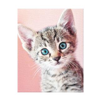 Toile Chaton mignon avec les yeux bleus