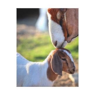 Toile Chèvre de mère embrassant son bébé sur la tête