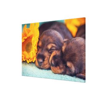 Toile Chiots adorables de sommeil Doxen