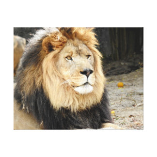 Toile Collection animale - lion africain