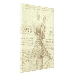 Toile Colonne vertébrale d'anatomie humaine par Leonardo