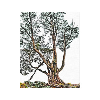 Toile Cypress isolé