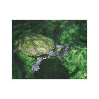 Toile de beaux-arts de tortue verte