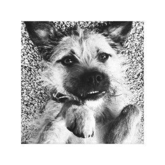 Toile de Terrier de frontière - je suis si mignon