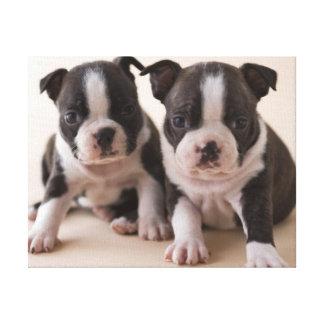 Toile Deux chiots de Boston Terrier