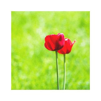 Toile Deux fleurs rouges de tulipe