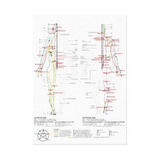 Toile Diagramme des méridiens humains