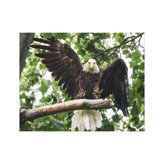 Toile Eagle chauve collant l'atterrissage