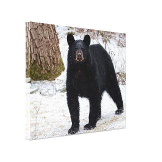 Toile enveloppée d'ours noir de la Pennsylvanie