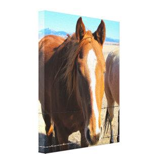 Toile enveloppée par cheval