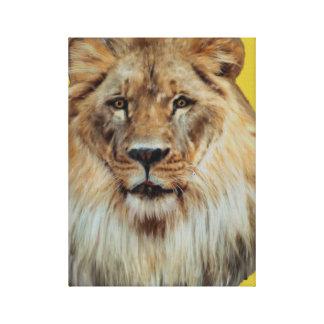 Toile enveloppée par lion africain
