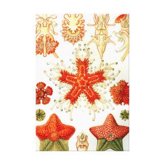 Toile Étoiles de mer d'Ernst Haeckel Asteridea