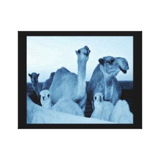 Toile Famille de chameau