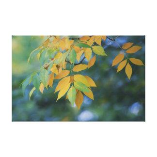 Toile Feuille d'automne