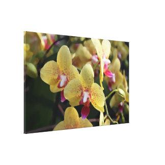Toile Fleurs jaunes d'orchidée