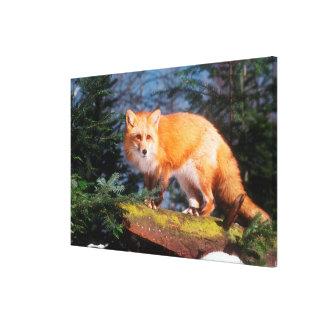Toile Fox rouge sur un rondin