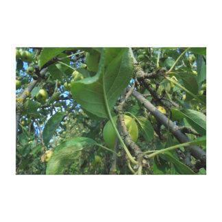 Toile Fruit. Pommes