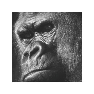 Toile Gorille masculin