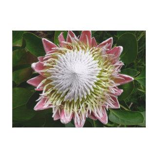 Toile Grande nature de fleur rose et blanche florale