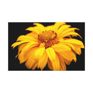 Toile Heliopsis 'Goldgefieder/Plume d'or
