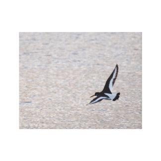 Toile Huîtrier sur l'aile