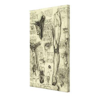 Toile Jambe humaine vintage Leonardo da Vinci de larynx