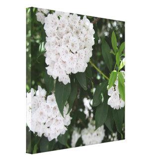 Toile Jolies fleurs blanches de laurier de montagne