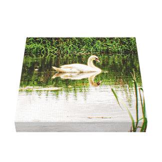 Toile Lac swan de la Norfolk
