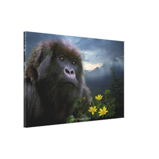 Toile Le gorille de montagne mis en danger a eu droit