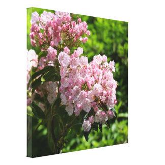 Toile Le joli rose de laurier de montagne fleurit la
