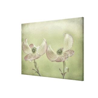 Toile Le plan rapproché du cornouiller rose fleurit |