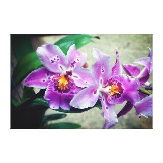 Toile Les orchidées pourpres ont enveloppé la copie de