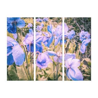 Toile Les pavots bleus, les pavots de l'Himalaya, trois